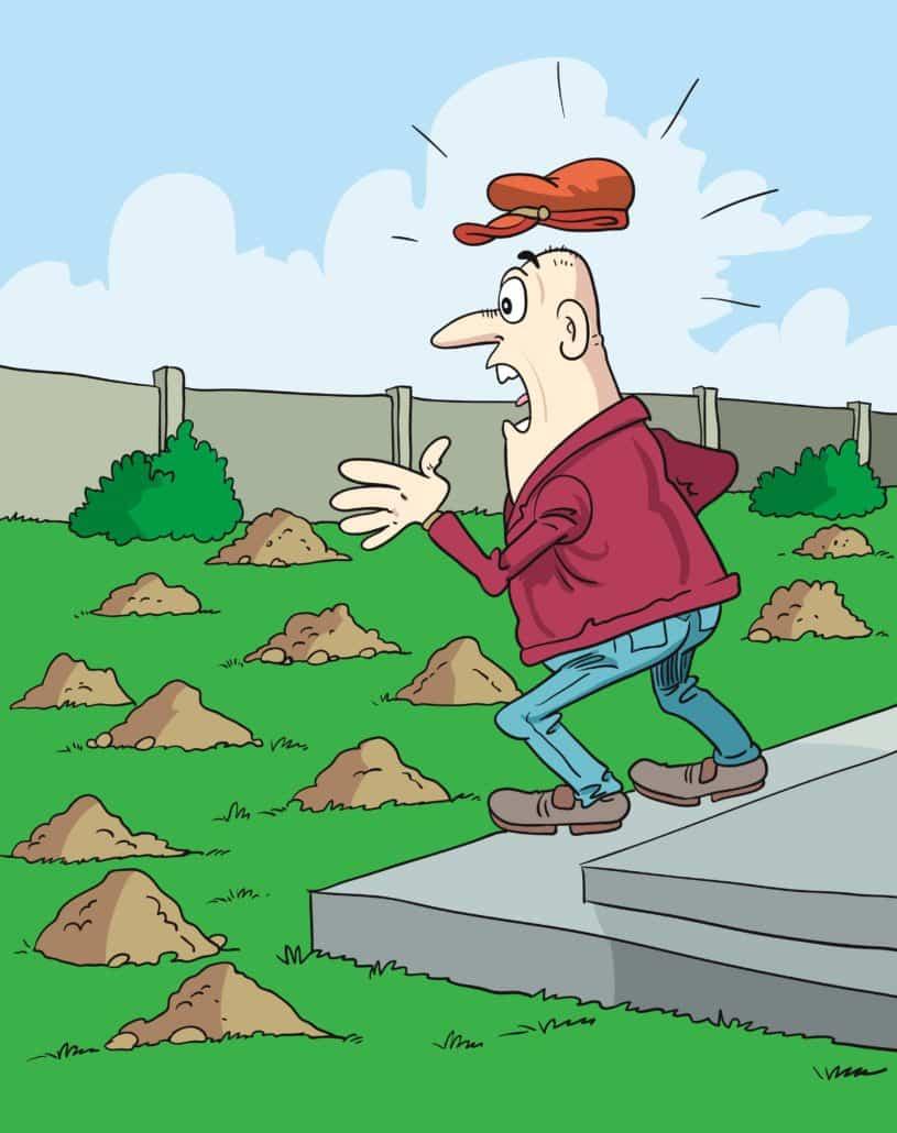 Mole piles everywhere in the yard